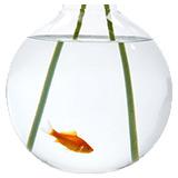 Zdravlje i higijena ribica