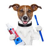 Zdravlje i higijena pasa